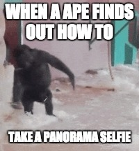 Spinning Ape | WHEN A APE FINDS OUT HOW TO TAKE A PANORAMA SELFIE | image tagged in mad world,ape,panorama selfie,selfie,spinning | made w/ Imgflip meme maker