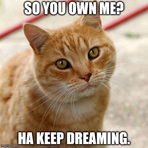 keep memeing | SO YOU OWN ME? HA KEEP DREAMING. | image tagged in cats | made w/ Imgflip meme maker