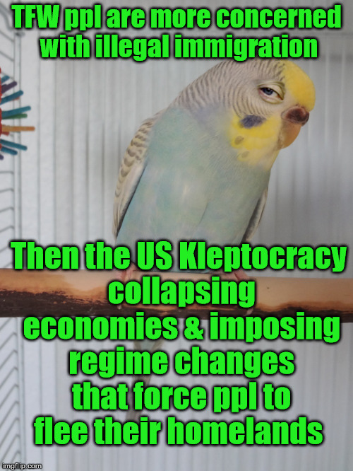 Cause & Effect | TFW ppl are more concerned with illegal immigration Then the US Kleptocracy collapsing economies & imposing regime changes that force ppl to | image tagged in sceptical budgie,oligarchy | made w/ Imgflip meme maker