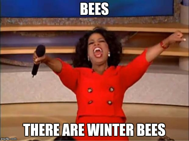 Oprah You Get A Meme | BEES THERE ARE WINTER BEES | image tagged in memes,oprah you get a | made w/ Imgflip meme maker