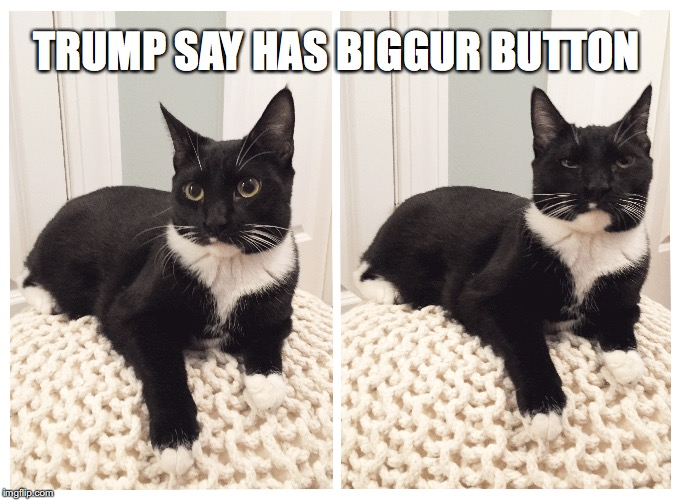 Trump Say Has Biggur Button | TRUMP SAY HAS BIGGUR BUTTON | image tagged in donald trump,trump,nuclear war,button,eyeroll,cats | made w/ Imgflip meme maker