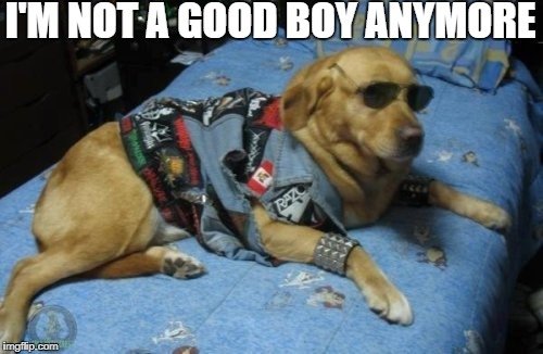Good Boy | I'M NOT A GOOD BOY ANYMORE | image tagged in good,boy,dog,metal,music,funny | made w/ Imgflip meme maker