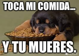 Funny animals | TOCA MI COMIDA... Y TU MUERES. | image tagged in funny animals | made w/ Imgflip meme maker