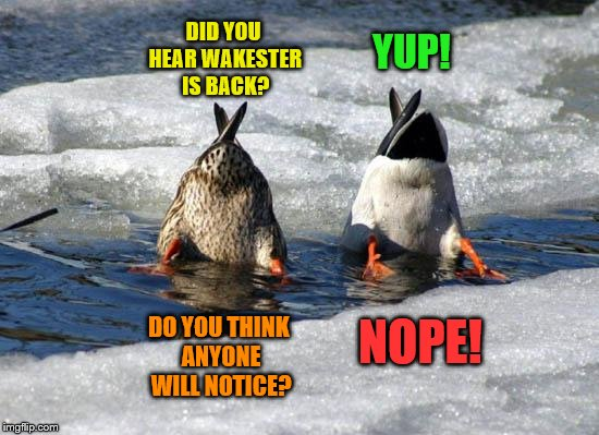 Same Wakester Different Name | DID YOU HEAR WAKESTER IS BACK? YUP! DO YOU THINK ANYONE WILL NOTICE? NOPE! | image tagged in wakester is back,ducks,happy new year | made w/ Imgflip meme maker