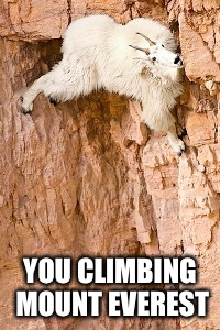 goat rock climbing | YOU CLIMBING MOUNT EVEREST | image tagged in goat rock climbing | made w/ Imgflip meme maker
