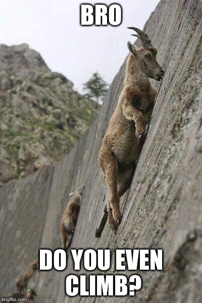 And I have trouble climbing the stairs... | BRO DO YOU EVEN CLIMB? | image tagged in mountain climbing,goat memes | made w/ Imgflip meme maker