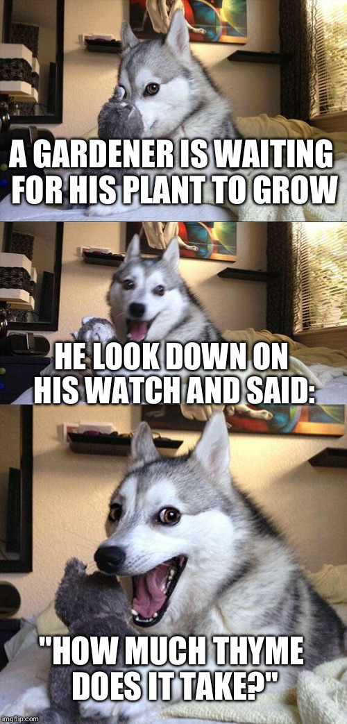 "Bad Pun Dog Meme | A GARDENER IS WAITING FOR HIS PLANT TO GROW HE LOOK DOWN ON HIS WATCH AND SAID: ""HOW MUCH THYME DOES IT TAKE?"" 