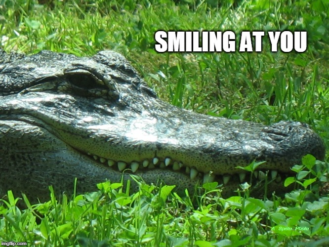 SMILING AT YOU | image tagged in smiling at you | made w/ Imgflip meme maker