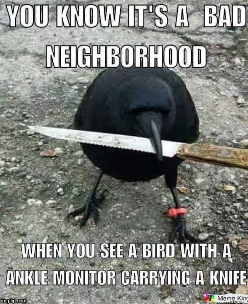 Ad neighborhood bird | image tagged in funny memes | made w/ Imgflip meme maker