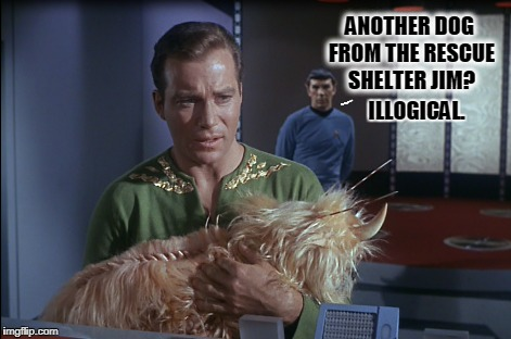 Shelter dogs | ANOTHER DOG FROM THE RESCUE SHELTER JIM? ILLOGICAL. | image tagged in spock illogical | made w/ Imgflip meme maker