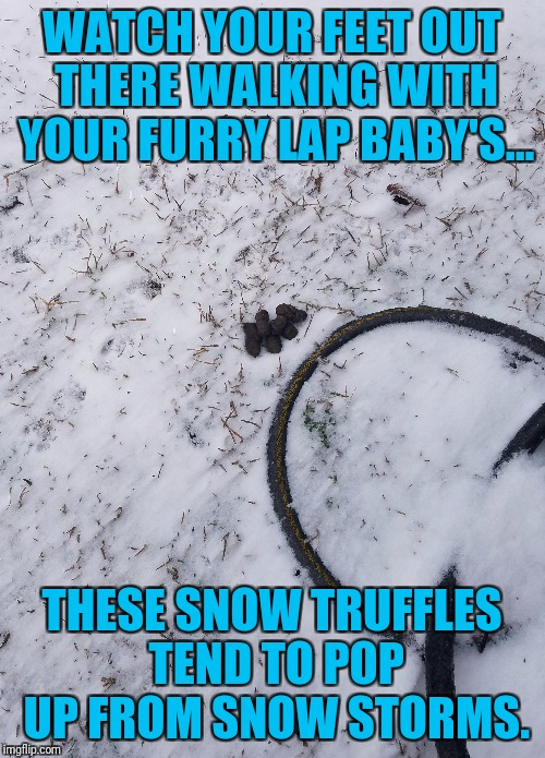 Snow truffles  | WATCH YOUR FEET OUT THERE WALKING WITH YOUR FURRY LAP BABY'S... THESE SNOW TRUFFLES TEND TO POP UP FROM SNOW STORMS. | image tagged in snow,dogs,dog poop | made w/ Imgflip meme maker