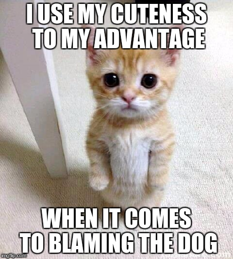Cute Cat Meme | I USE MY CUTENESS TO MY ADVANTAGE WHEN IT COMES TO BLAMING THE DOG | image tagged in memes,cute cat | made w/ Imgflip meme maker