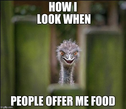 Louring Ostrich | HOW I LOOK WHEN PEOPLE OFFER ME FOOD | image tagged in louring ostrich | made w/ Imgflip meme maker