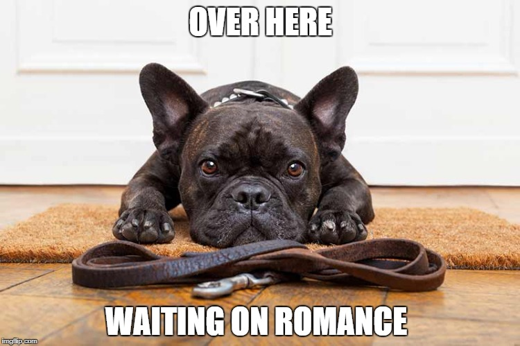 OVER HERE WAITING ON ROMANCE | image tagged in waiting dog,romance,relationship | made w/ Imgflip meme maker