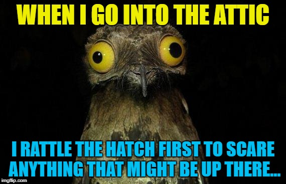 I've been putting the Christmas decorations away... :) | WHEN I GO INTO THE ATTIC I RATTLE THE HATCH FIRST TO SCARE ANYTHING THAT MIGHT BE UP THERE... | image tagged in memes,weird stuff i do potoo,attic,christmas decorations | made w/ Imgflip meme maker