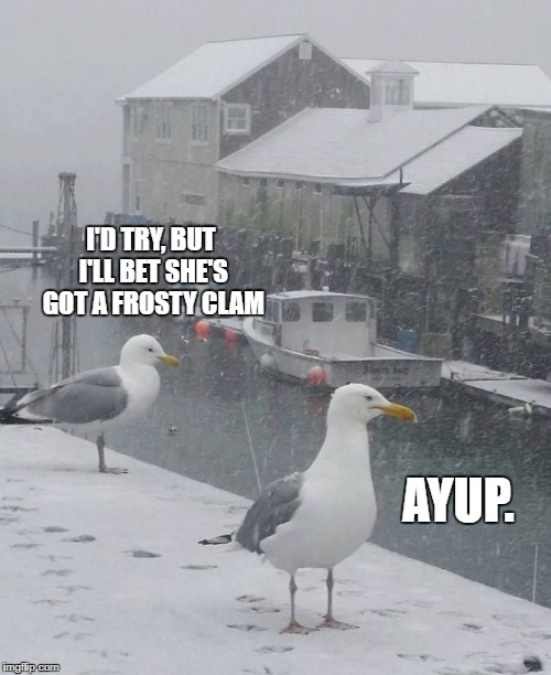 I'D TRY, BUT I'LL BET SHE'S GOT A FROSTY CLAM AYUP. | image tagged in mainer gulls | made w/ Imgflip meme maker