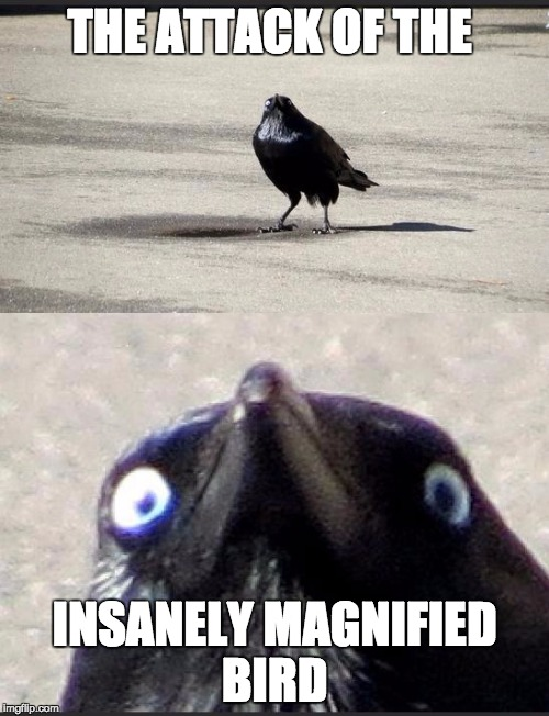 insanity crow | THE ATTACK OF THE INSANELY MAGNIFIED BIRD | image tagged in insanity crow | made w/ Imgflip meme maker