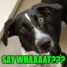 SAY WHAAAAT??? | made w/ Imgflip meme maker