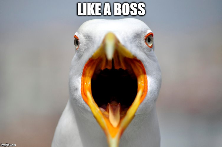 LIKE A BOSS | made w/ Imgflip meme maker