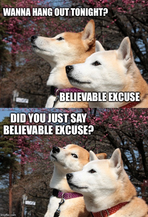 Me and my bf | WANNA HANG OUT TONIGHT? BELIEVABLE EXCUSE DID YOU JUST SAY BELIEVABLE EXCUSE? | image tagged in bad pun dogs,excuses,funny memes,believe,funny animals | made w/ Imgflip meme maker