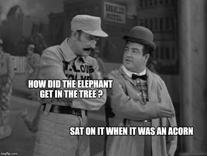 Abbott and Costello | HOW DID THE ELEPHANT GET IN THE TREE ? SAT ON IT WHEN IT WAS AN ACORN | image tagged in abbott and costello | made w/ Imgflip meme maker