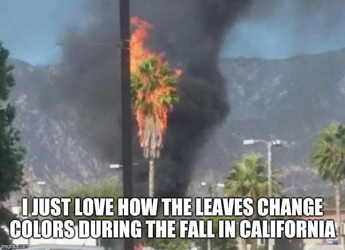 Move to California they said, it'll be great they said  |  I JUST LOVE HOW THE LEAVES CHANGE COLORS DURING THE FALL IN CALIFORNIA | image tagged in funny,memes,california | made w/ Imgflip meme maker