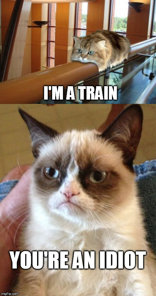Choo choo | I'M A TRAIN YOU'RE AN IDIOT | image tagged in grumpy cat,you're an idiot | made w/ Imgflip meme maker