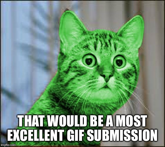 RayCat WTF | THAT WOULD BE A MOST EXCELLENT GIF SUBMISSION | image tagged in raycat wtf | made w/ Imgflip meme maker