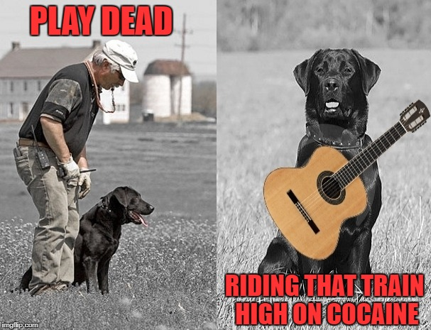 playing dead | PLAY DEAD RIDING THAT TRAIN HIGH ON COCAINE | image tagged in dog | made w/ Imgflip meme maker