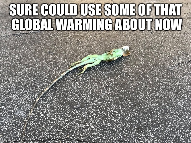 Dead lizards  | SURE COULD USE SOME OF THAT GLOBAL WARMING ABOUT NOW | image tagged in donald trump | made w/ Imgflip meme maker