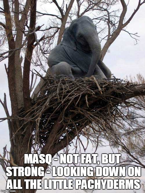 MASQ - NOT FAT, BUT STRONG - LOOKING DOWN ON ALL THE LITTLE PACHYDERMS | made w/ Imgflip meme maker