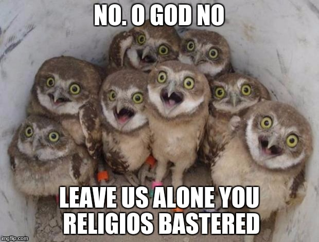 Excited Owls | NO. O GOD NO LEAVE US ALONE YOU RELIGIOS BASTERED | image tagged in excited owls | made w/ Imgflip meme maker