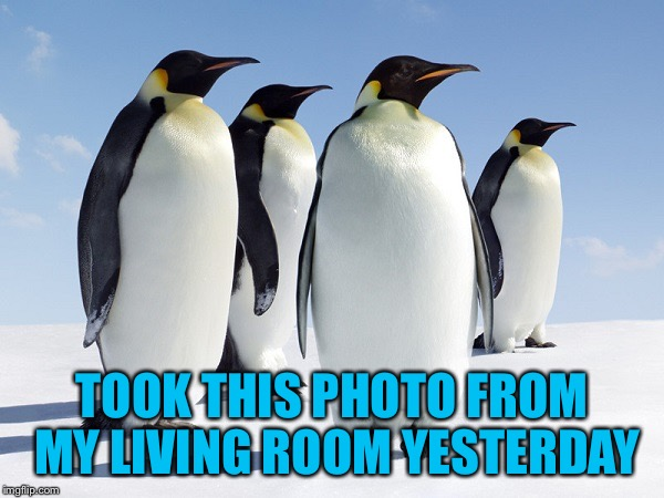 TOOK THIS PHOTO FROM MY LIVING ROOM YESTERDAY | image tagged in group of penguins | made w/ Imgflip meme maker