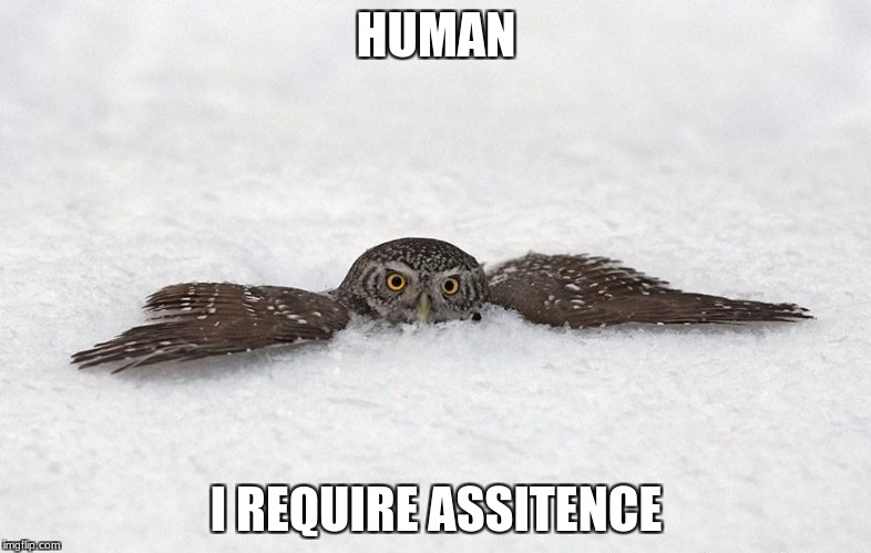 Awkward Owl | HUMAN I REQUIRE ASSITENCE | image tagged in awkward owl | made w/ Imgflip meme maker