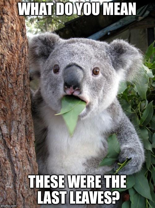 Surprised Koala Meme | WHAT DO YOU MEAN THESE WERE THE LAST LEAVES? | image tagged in memes,surprised koala | made w/ Imgflip meme maker