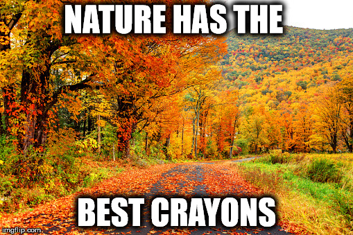 NATURE HAS THE BEST CRAYONS | image tagged in leaves | made w/ Imgflip meme maker