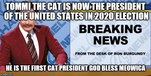 Ron Burgandy | TOMMI THE CAT IS NOW THE PRESIDENT OF THE UNITED STATES IN 2020 ELECTION HE IS THE FIRST CAT PRESIDENT GOD BLESS MEOWICA | image tagged in ron burgandy | made w/ Imgflip meme maker