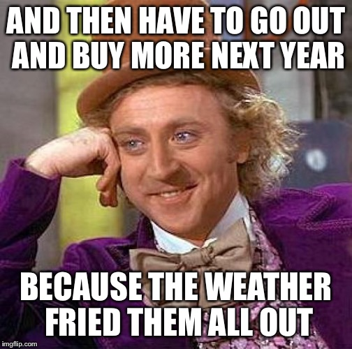 Creepy Condescending Wonka Meme | AND THEN HAVE TO GO OUT AND BUY MORE NEXT YEAR BECAUSE THE WEATHER FRIED THEM ALL OUT | image tagged in memes,creepy condescending wonka | made w/ Imgflip meme maker
