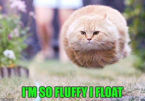 I'M SO FLUFFY I FLOAT | made w/ Imgflip meme maker