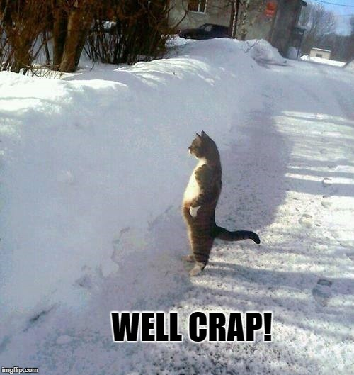 snow cat | WELL CRAP! | image tagged in funny cats | made w/ Imgflip meme maker