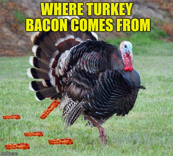 WHERE TURKEY BACON COMES FROM | made w/ Imgflip meme maker