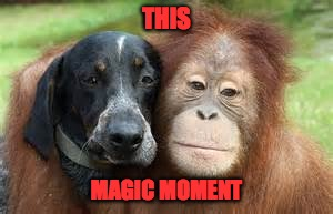 This Magic Moment. | THIS MAGIC MOMENT | image tagged in odd couple,memes,magic moment | made w/ Imgflip meme maker