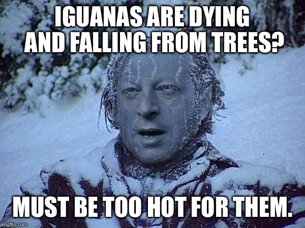IGUANAS ARE DYING AND FALLING FROM TREES? MUST BE TOO HOT FOR THEM. | made w/ Imgflip meme maker