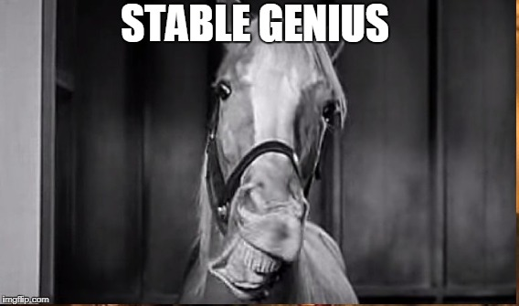 Stable Genius | STABLE GENIUS | image tagged in trump tweet,trump twitter,trump meme,donald trump memes | made w/ Imgflip meme maker