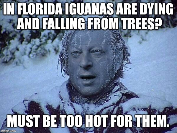 We go live to Al Gore for comment: | IN FLORIDA IGUANAS ARE DYING AND FALLING FROM TREES? MUST BE TOO HOT FOR THEM. | image tagged in frozen al gore,global warming,memes,al gore | made w/ Imgflip meme maker