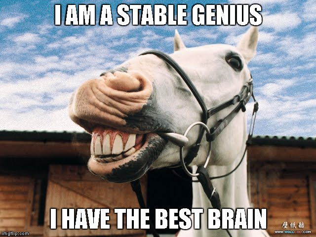 I AM A STABLE GENIUS I HAVE THE BEST BRAIN | image tagged in genius,trump | made w/ Imgflip meme maker