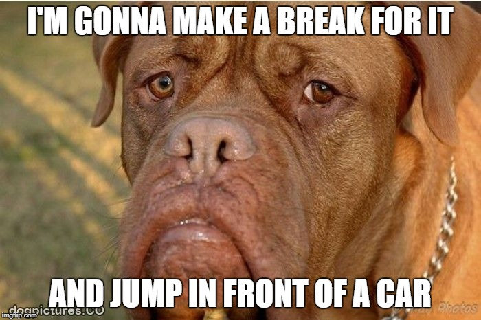 I'M GONNA MAKE A BREAK FOR IT AND JUMP IN FRONT OF A CAR | made w/ Imgflip meme maker
