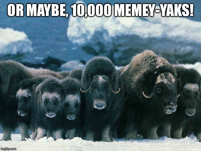 OR MAYBE, 10,000 MEMEY-YAKS! | made w/ Imgflip meme maker