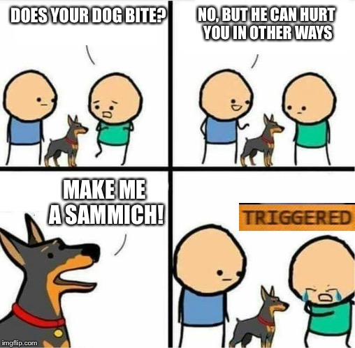 Maybe a salmon sammich? | DOES YOUR DOG BITE? NO, BUT HE CAN HURT YOU IN OTHER WAYS MAKE ME A SAMMICH! | image tagged in meme,triggered,triumph the insult comic dog | made w/ Imgflip meme maker