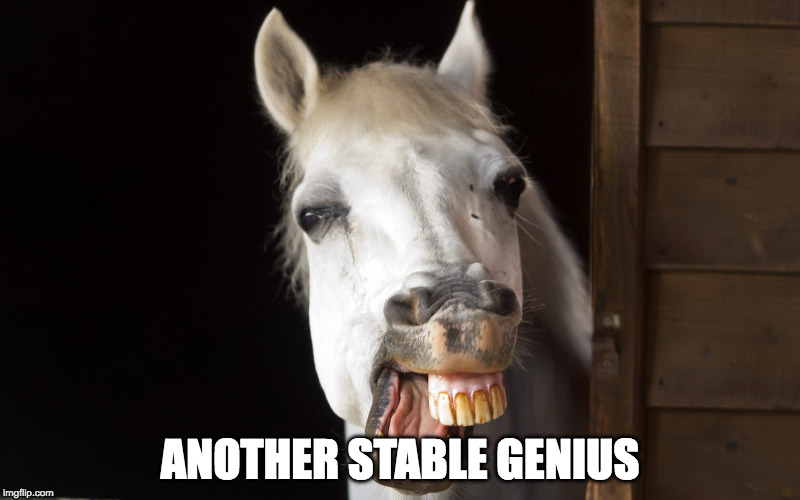 ANOTHER STABLE GENIUS | image tagged in horse smile | made w/ Imgflip meme maker